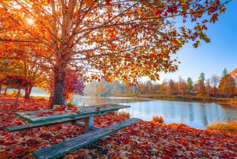 Autumn Centerpieces for Tables