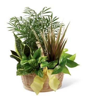 Funeral Plants And Flowers