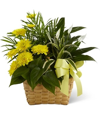 Plants For Funerals