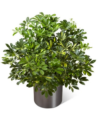 Plant For Funeral