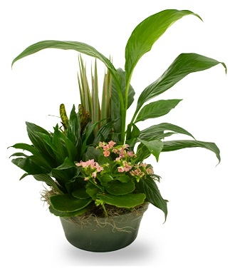 House Plants For Funerals