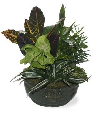 Common Funeral Plants