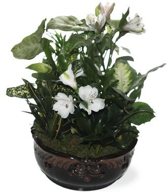 Green Plants Funerals