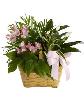 Plants For A Funeral