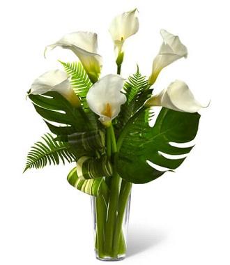 Best Funeral Plants