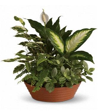 Funeral Plants Floor Plants
