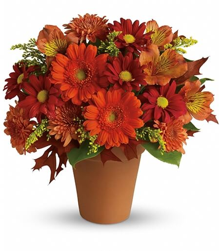 Flower Of Season