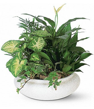 Plants For Funeral Service