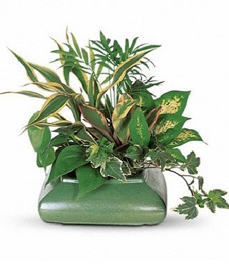 Potted Plants For Funerals