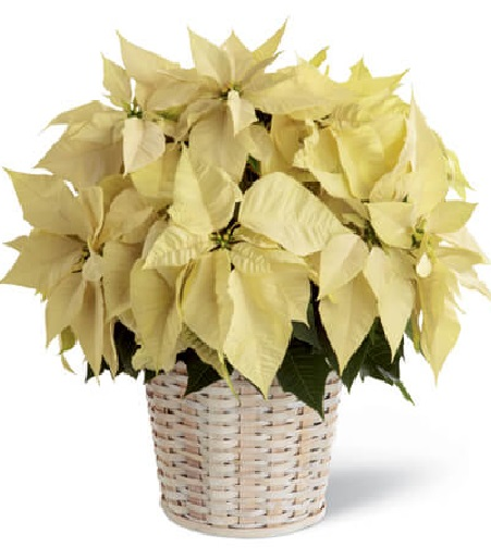 Veterans Day Flower Online