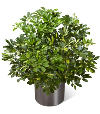 Cheapest Plants Online