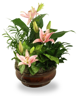 Fresh Flower Online