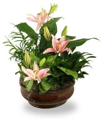 Send Plants
