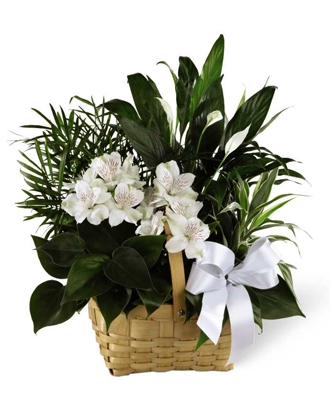 Common Funeral Plants